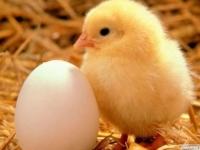 В ВКО построят птицефабрику мощностью 110 млн яиц в год