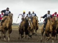 В Усть-Каменогорске пройдут верблюжьи бега