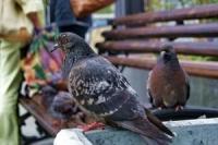 В Усть-Каменогорске городские птицы находятся под угрозой вымирания