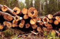 Проблемы развития лесного хозяйства обсудили в Усть-Каменогорске