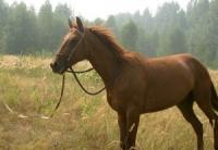 Полцарства за коня…