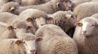 В Восточном Казахстане задержан скотокрад, похитивший скот почти на 1 млн тенге