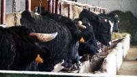 Региональная стратегия контроля ящура будет разработана в Казахстане