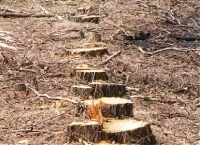 Под прикрытием выборочной санитарной рубки фактически велись и ведутся сплошные рубки леса