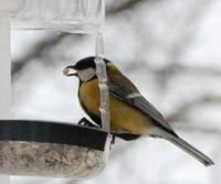 Накорми птиц