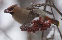 В Усть-Каменогорске гибнут птицы
