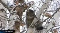 В Усть-Каменогорске обычная кошка устроила настоящий переполох