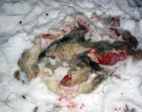 Задержан браконьер
