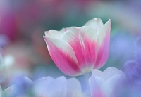 (+Программа) 500 мероприятий, посвященных празднованию Наурыз