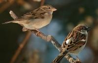 В лесах ВКО перевелись птицы