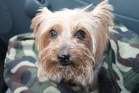 В Усть-Каменогорске акция в защиту беспризорных собак