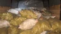 Усть-Каменогорца, незаконно перевозившего почти 2 тонны рыбы, задержали в Палодарской области